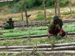 AGCO men planting seedlings