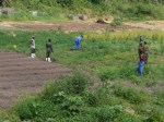 AGCO men working in the vegetable gardens