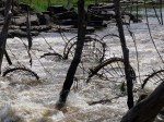 These are some of the nets in the rapids.
